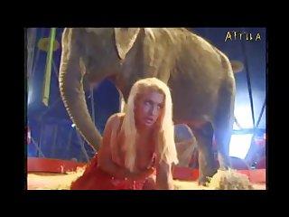 Milly Amorim 2795 3115 Elephant (part 1)