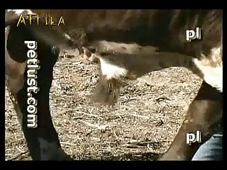 Petlust M11 2 Zoo Bull Sex Farm Boys (part 2)