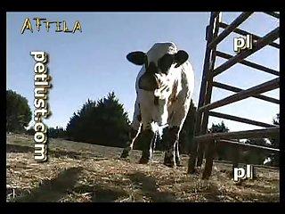 Petlust M11 2 Zoo Bull Sex Farm Boys (part 2)