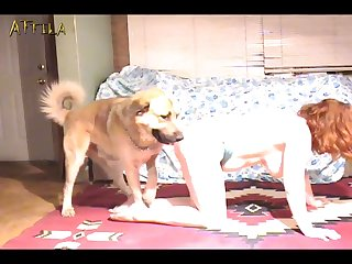 Doggie Gangbang (part 1)